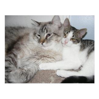 Verdorbenes Kätzchen in Liebe Karte