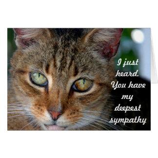 Verspätetes Katzen-Beileid Karte