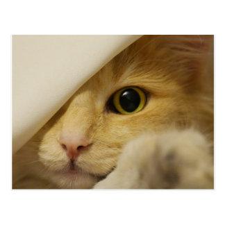 Verstecken-Kätzchen unter Decke Postkarte