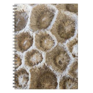 Versteinertes korallenrotes Nahaufnahme-Foto Spiral Notizblock