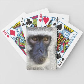vervet vervet-monkey-275013 Affe-Affefrau Bicycle Spielkarten