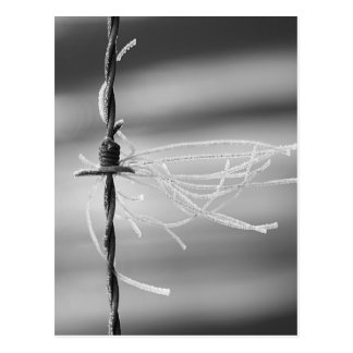 Verwirrte Faden - Barb-Draht-Stillleben-Fotografie Postkarte