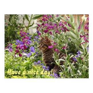 Verwirrte Katze! Postkarte