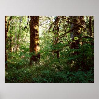 Verzauberter Waldplakat-Druck