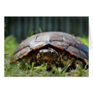 Verzierte hölzerne Schildkröte auf seinem Niveau Mitteilungskarte