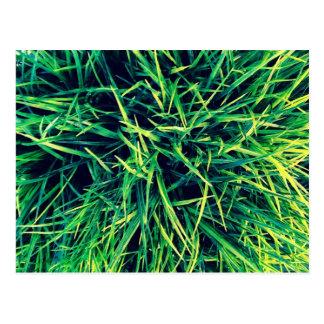 Vibrierendes Gras Postkarte