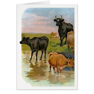 Vieh im Strom Karte