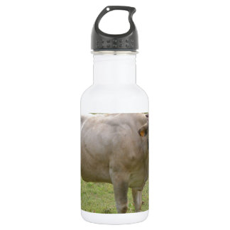 Vieh schüchtert im Gras in einer Wiese ein Edelstahlflasche