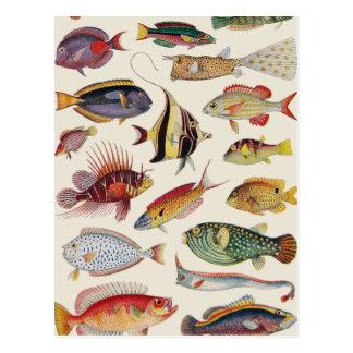 Vielzahl der Fische Postkarte