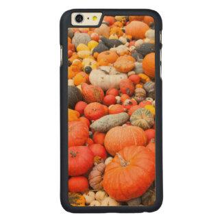 Vielzahl des Kürbisses für Verkauf, Deutschland Carved® Maple iPhone 6 Plus Hülle