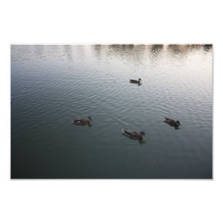 Vier Enten Photographischer Druck
