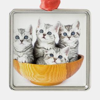Vier junge Katzen, die in der hölzernen Schüssel Silbernes Ornament