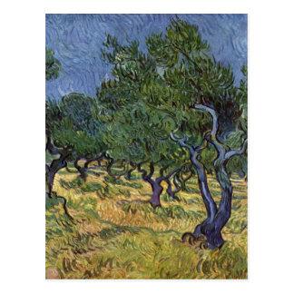 Vincent van Gogh - Olivenhain Postkarte