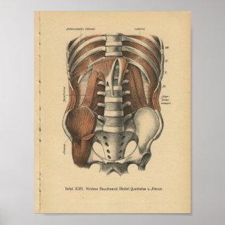 Vintage 1888 Deutsch-Anatomie-Druck-Abdomen-Pelvis Poster