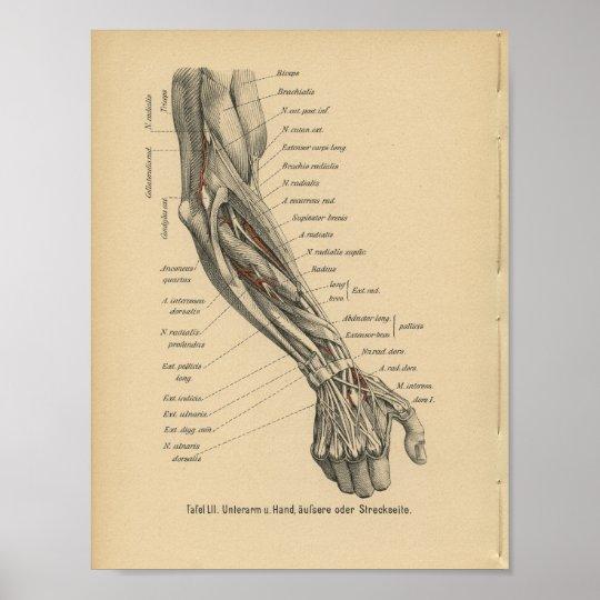 Vintage 1888 Deutsch-Anatomie-Druck-Arm-Hand Poster   Zazzle.ch