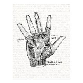 Vintage Anatomie-Kunst die Palme der Hand Postkarte