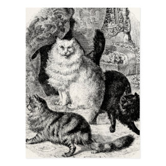 Vintage Angora-Katze 1800s persische Postkarte