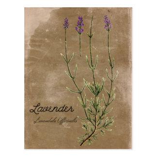 Vintage Art-Lavendel-Blumen-Postkarte Postkarte