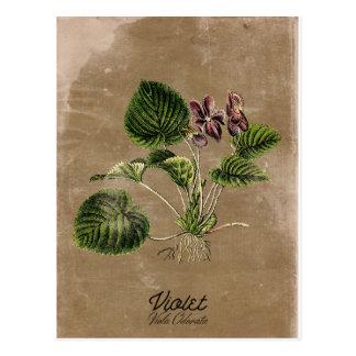Vintage Art-Veilchen-Postkarte Postkarte