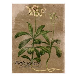 Vintage Art Wintergreen Pflanzen-Postkarte Postkarte
