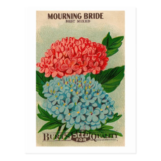 Vintage beklagenbrücken-Blume seedpacket Postkarte