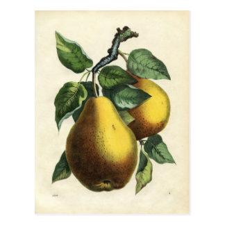 Vintage Birnenpostkarte Postkarte
