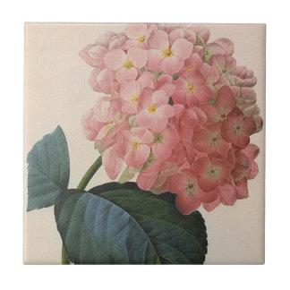 Vintage Blumen, rosa Hydrangeahortensia-Garten Kleine Quadratische Fliese