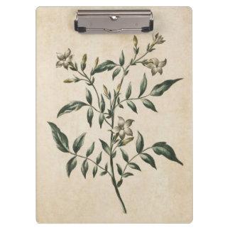 Vintage botanische Blumenjasmin-Illustration Klemmbrett