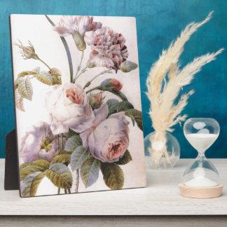 Vintage botanische Illustration, rosa Rose Fotoplatte