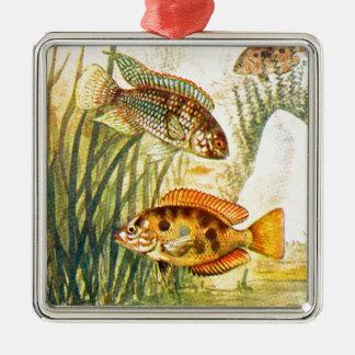 Vintage Cichlid-Fische Quadratisches Silberfarbenes Ornament