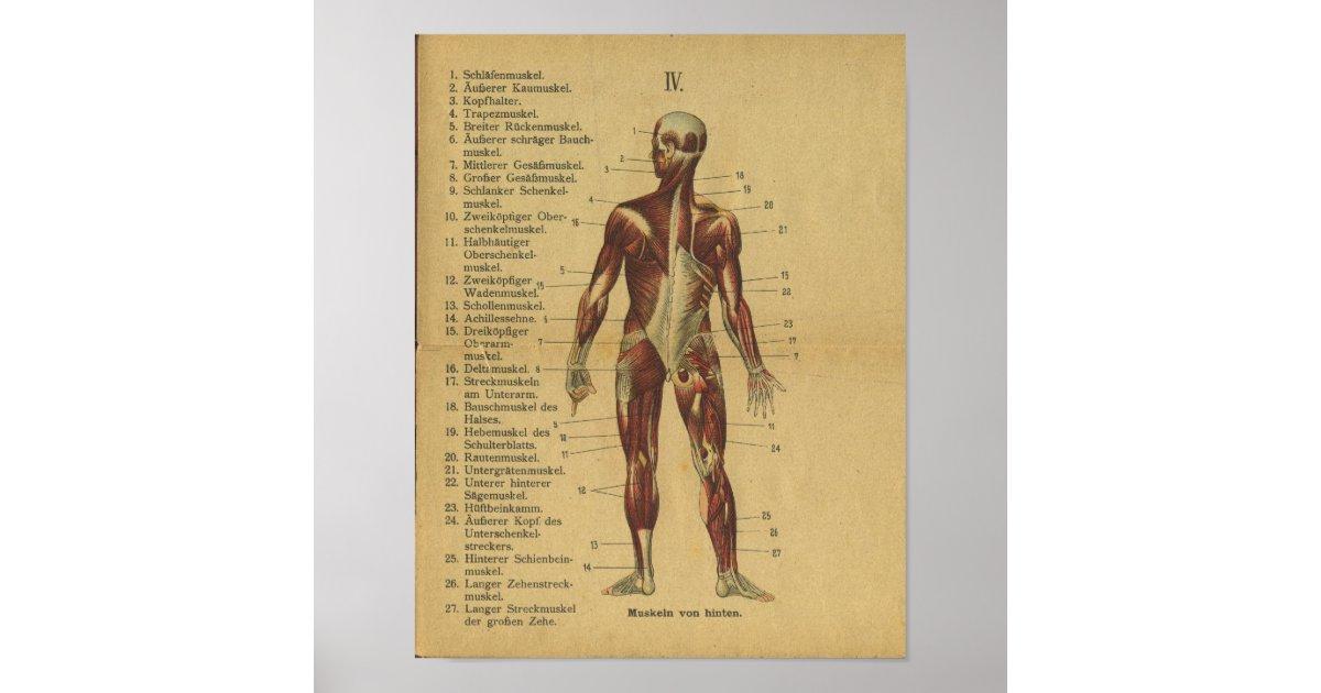Großartig Muskeln Spiele Für Anatomie Und Physiologie Ideen ...