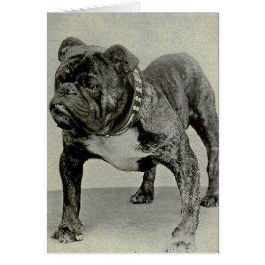 Vintage englische Bulldoggen-Fotografie Grußkarte