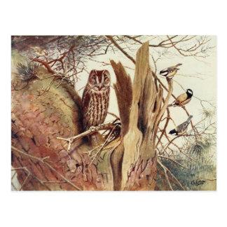 Vintage Eule u. Vögel, die Postkarte malen