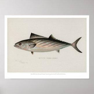 Vintage Fische - Blaufisch Poster