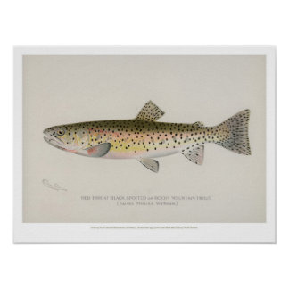 Vintage Fische - felsiger Gebirgsforelle Poster