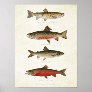 Vintage Fische - Forellen Poster