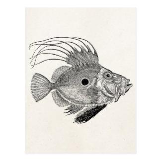 Vintage Fische Johns Doree - Wasserfisch-Schablone Postkarte