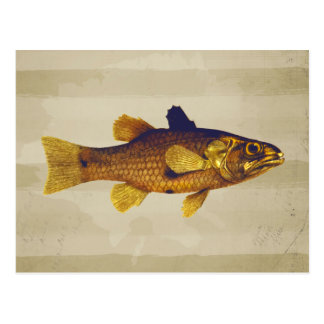 Vintage Frischwasserfische Ilustration Postkarte