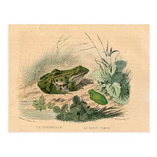 Vintage Froschdruckkarte Postkarte
