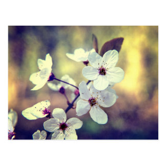 Vintage Frühlings-Blüte Postkarte