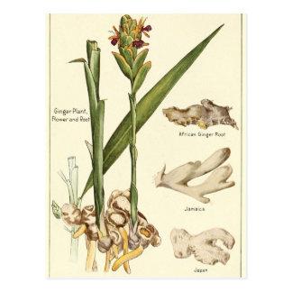 Vintage Ingwerillustrationspostkarten-Rezeptkarte Postkarte