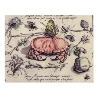Vintage Krabbe, Botanicals, Insekten und Blumen Postkarte