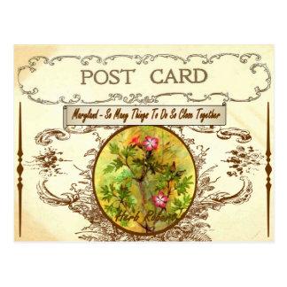 Vintage Maryland-Staats-Blumen-Postkarte Postkarte