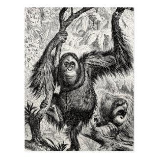 Vintage Orang-Utan Illustration - Affe 1800's Postkarte