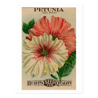 Vintage Petuniesamen-Paketpostkarte Postkarte