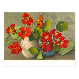 Vintage Postkarte der Kapuzinerkäseblumensträuße