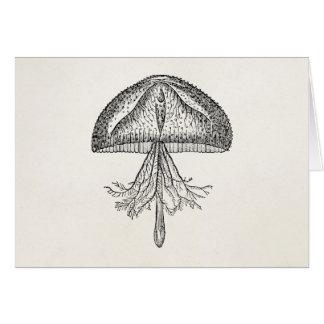 Vintage Quallen-Antiken-Quallen-Schablone Karte