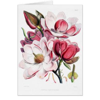 Vintage rosa Magnolien-Blumen-Botanik-Illustration Karte