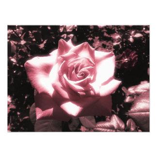 Vintage rosa Rose Fotodruck