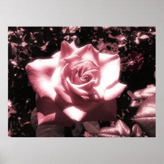 Vintage rosa Rose Poster